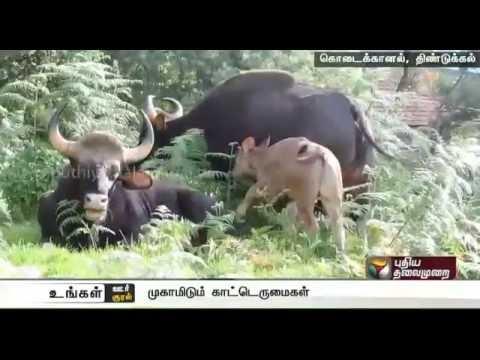 Ungal-Oor-Ungal-Kural-Morning-News-17-08-2016-Puthiyathalaimurai-TV