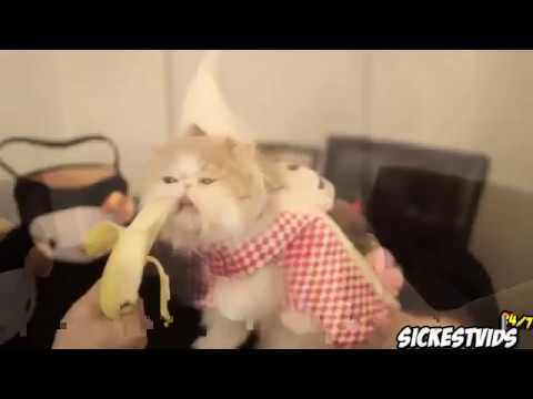 Top 10 Countdown Funny Cat Videos 2014 HD This Funny Cat Videos Funny Footage of Cats