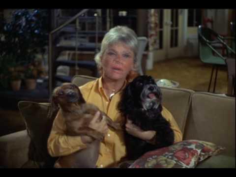 Video - Η Ντόρις Ντέι άφησε όλη της την περιουσία - 180 εκατ. δολάρια - σε ζώα, γράφει η Bild!