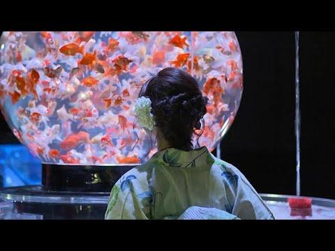 Ausstellung in Japan: Kunst mit Zierfischen