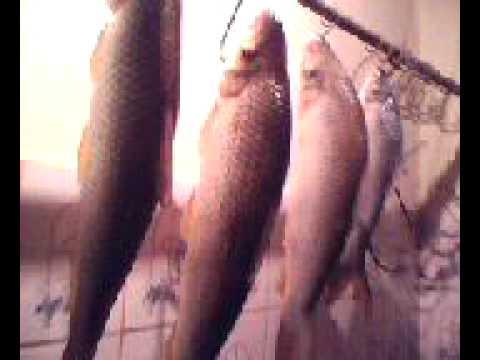 pescaria em ibiai clube dos 14  em maio de  2011 william, amaral,picapau ,ailtom