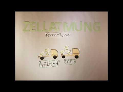 Die Zellatmung II Lernvideo (видео)