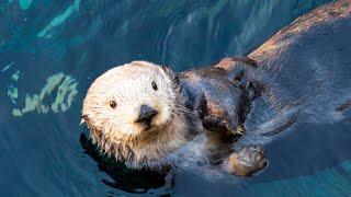Monterey (CA) United States  City new picture : Visiting Monterey Bay Aquarium | Monterey | California | United States