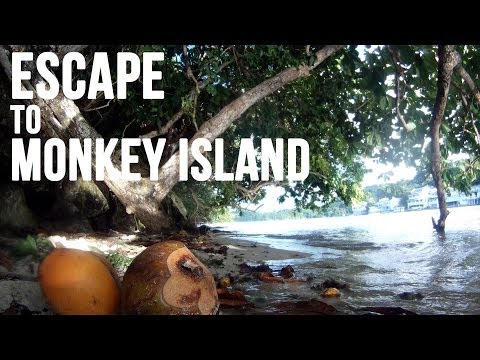 monkey - Travel Annex takes you on an informative journey to Pellew Island, better known as Monkey Island, just outside of Port Antonio, Jamaica. Keep your eye out fo...