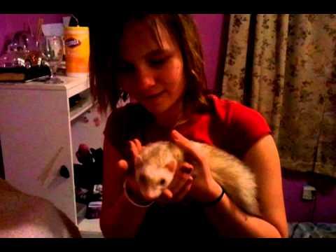 Robin meets Swiper...her new ferret  1/3/2011