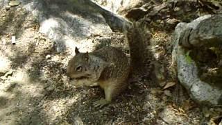 Hmong & Squirrel Yosemite