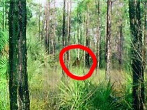 Bigfoot Caught on Tape! Amazing Footage!