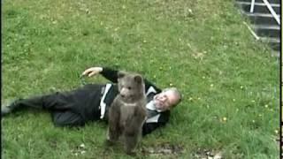 Video Fun with a super cute GRIZZLY BEAR CUB !!!! MP3, 3GP, MP4, WEBM, AVI, FLV Mei 2017