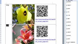 Excel 校園植物檢索表 教學