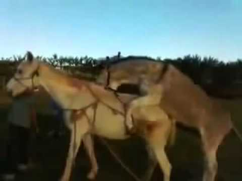 Video 2014 NEWS mating 2014 funny 2014 new matingsanimal videos funny video crazy videos 2014 3 download in MP3, 3GP, MP4, WEBM, AVI, FLV January 2017
