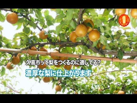 3分でわかる「久喜の梨」【久喜市PRビデオ】