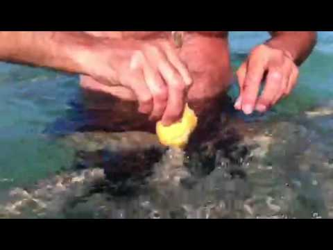 pescare con le mani è possibile, provate anche voi!