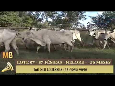 186º LEILÃO VIRTUAL MB LEILÕES