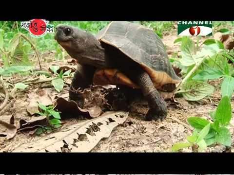 Nature and Life - Episode 99 (Endangered Turtles)