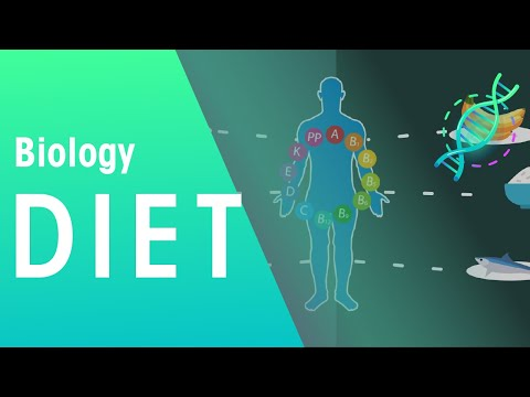 Balanced diet | Health | Biology | FuseSchool