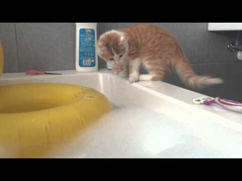 大家都知道貓咪喜歡跑到圈圈裡去,但這隻貓咪沒有發現到下面是什麼…