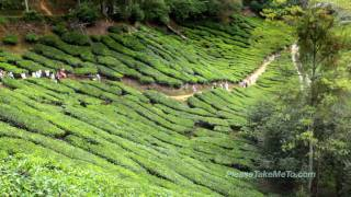Cameron Highlands Malaysia  City new picture : Cameron Highlands, Malaysia (1080HD)