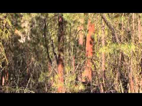 Federal Forestlands