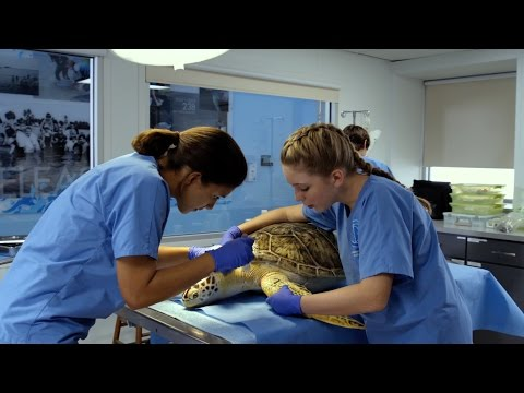 Dolphin Tale 2 (Featurette 'The Mission')
