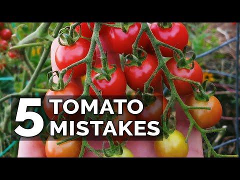 5 Tomato Grow Mistakes To Avoid