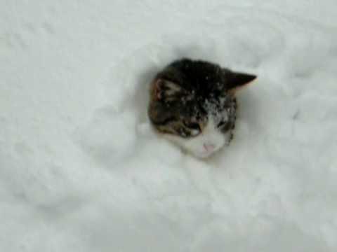 2 gatti giocano nella neve ma uno di loro fa qualcosa di inaspettato!