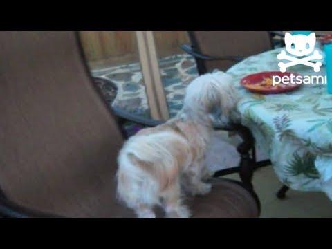 il-cane-e-la-sedia-girevole-217