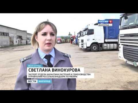 Специалисты Россельхознадзора пристально следят за качеством импортных овощей в Волгоградской области.
