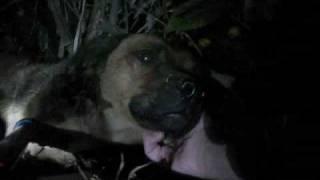 Jonny - Rescued last night (By Eldad Hagar)
