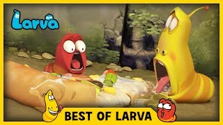 Larva brings you the best of the Larva Episodes for week 26 of 2017. Tune in and join red and yellow on their wild adventures.⏩⏩⏩ SUBSCRIBE to LARVA: http://www.youtube.com/channel/UCph-WGR0oCbJDpaWmNHb5zg?sub_confirmation=1🐌 SEASON 1 - Storm Drain 🐌Red and Yellow, two strange Larva who live underneath a storm drain, encounter many surprises which fall from the outside world to their underground universe. For these two wriggly friends, anything is a good excuse for fun. See the world from Red and Yellow's point of view, and experience what a dangerous and exciting place the world can be for such small friends.🐌 SEASON 2 - HOUSE 🐌Eager to explore the world above, Red & Yellow squat in an old house stuck between high-rise buildings in the big city. Exploring their new home and meeting new creatures means more laughs for the comic duo. Sometimes they fight. Sometimes they find themselves in trouble together. A story of two cute and hilarious larva.🐌 SEASON 3 - NEW YORK 🐌Now it's the New York City. Watch Red and Yellow's incredible abilities while they explore the city. A whole new adventure in a bigger scale! The exciting survival story of two little Larva in New York.🐌 THE CHARACTERS 🐌💛 Yellow 💛 Yellow is a dimwitted and happy-go-lucky yellow colored larva with an antenna. Yellow is always abused by Red, but that never endangers their friendship. Although usually he obeys Red, he loses his mind in front of food.❤️ Red ❤️Red is a mostly hot-tempered and greedy red colored larva. His specialty is shouting and kicking like Bruce Lee. He is always showing off and abusing Yellow, but he often ends up hurting himself instead.💜 Violet 💜Violet is an oversized ghost slug. He is sometimes shown with his lower half buried in the ground. When he is threatened, he exposes his whole body and roars.🚪 Brown 🚪Brown is a cloying dung beetle that gathers poop. To him, poop is either his food or his treasure. He hates it when other insects touch his prized poop. He has a long strand of h