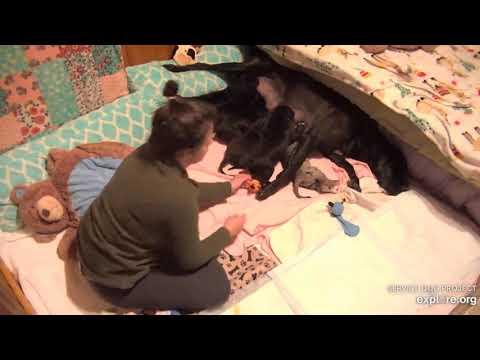 Paula's 6 pups 8pmish to 1235am 1122019 Lindsay nite