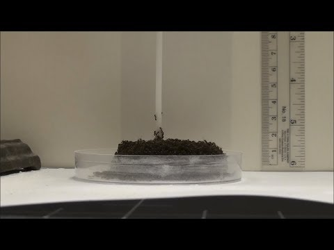 Ant Tower Video