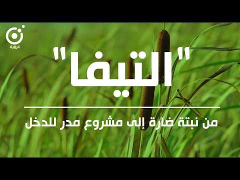اترارزة: تحويل نبتة ضارة إلى مشروع مدر للدخل – فيديو