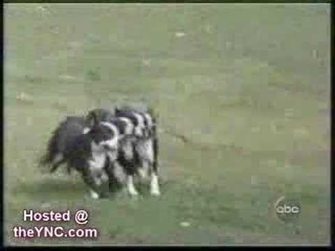 il video più famoso sulle scene di animali esilaranti