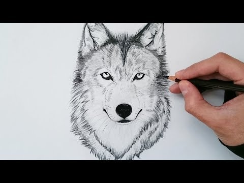 Cómo Dibujar Un Lobo Realista Explicado Paso A Paso - How To Draw A Wolf Step By Step