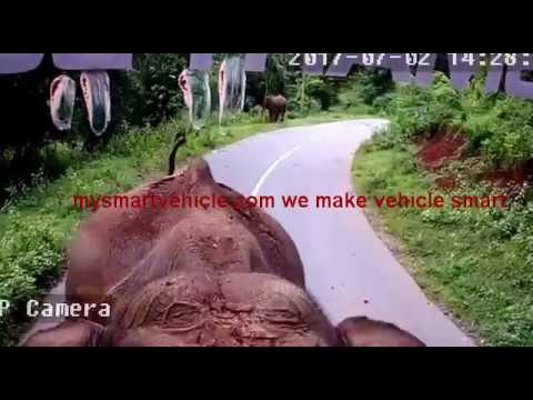 Video Wild Elephant attack Lakshmika SmartBUS at wayanad Forest download in MP3, 3GP, MP4, WEBM, AVI, FLV January 2017