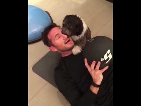 Vita da cani? No, allenamento con Puppy Lampard