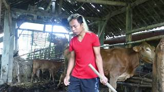 Video Kehidupan di DESA (nimpal letong) MP3, 3GP, MP4, WEBM, AVI, FLV November 2018