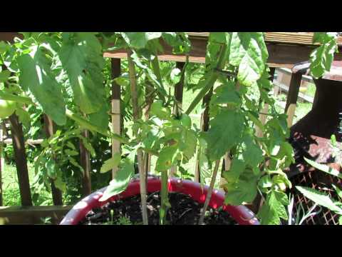 how to fertilize cucumbers in containers