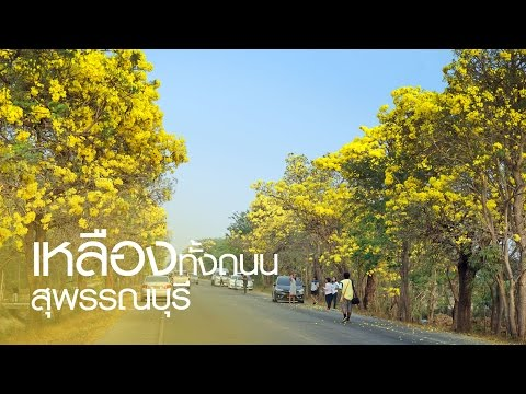ถนนสายต้นไม้ เหลืองปรีดียาธร