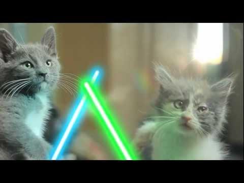 星際大戰貓貓版