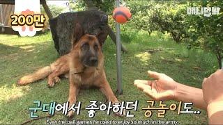 Video Olga's journey to becoming a civilian dog★ MP3, 3GP, MP4, WEBM, AVI, FLV Juni 2018