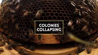 Honey bees across the world are experiencing extreme population declines. In 2016, beekeepers in Maryland lost more than half of their hives. CNS News Bin reporters give you an immersive 360-degree look at why trouble for the bees, spells trouble for people too.