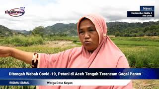 Ditengah Wabah Covid-19, Petani di Aceh Tengah Terancam Gagal Panen (HARIANSIBER TV)