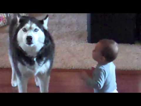 Hund och liten bebis snackar