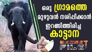 Video What wild elephant did to people in a village | Secret File | Latest Episode MP3, 3GP, MP4, WEBM, AVI, FLV Januari 2019