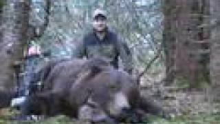 Bow Hunt Brown Bear