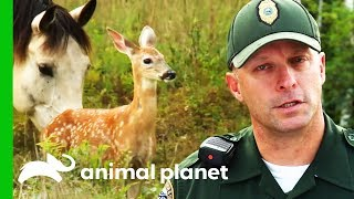 Trapped Baby Deer Needs Help Escaping! | North Woods Law by Animal Planet