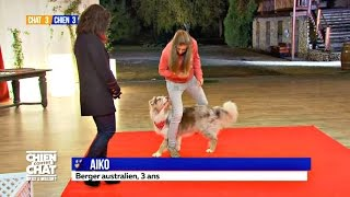 Aiko : un berger devenu star!