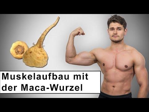 Muskelaufbau mit Hilfe der Maca Wurzel