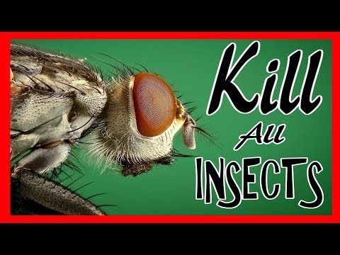 How to kill flies, ants and fruit flies
